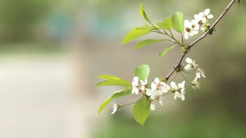 Image result for branches in spring