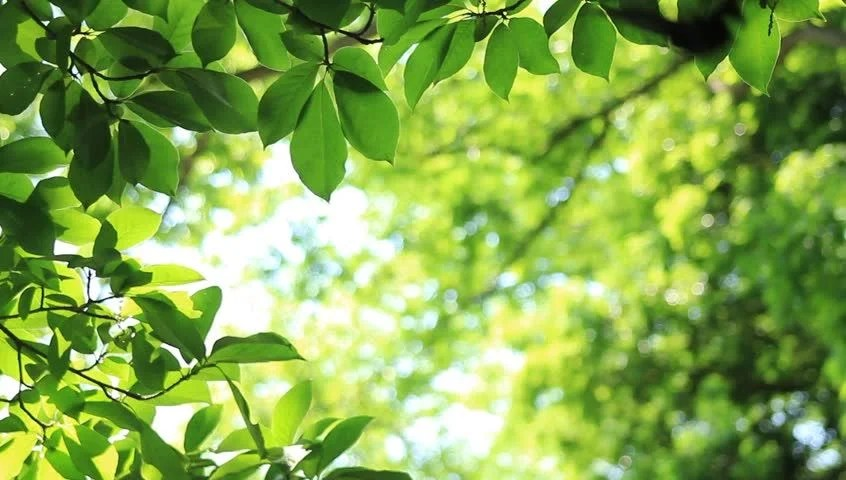 Fresh Green Leaves Stock Footage Video 100 Royalty Free