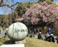 上野公園桜2017⑫