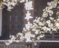 寛永寺根本中堂桜2021_04