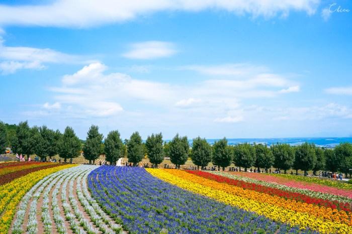 北海道夏天代表景點!富良野「富田農場」薰衣草花田5