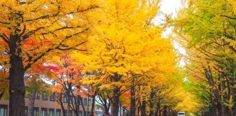 札幌「北海道大學」明信片般的校園美景!銀杏、紅葉、綠林都浪漫