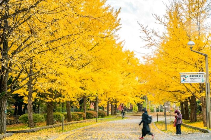 中島公園 札幌銀杏景點