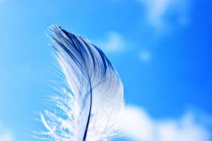 青空、羽根、羽毛、繊細、HSP