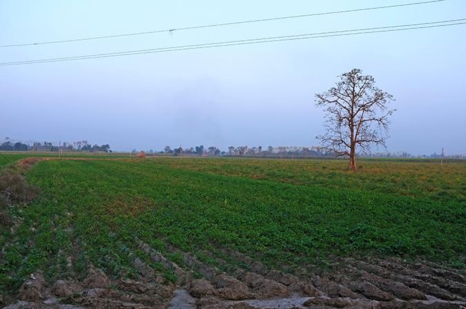 Akanksha Redhu | Travel India | lone tree