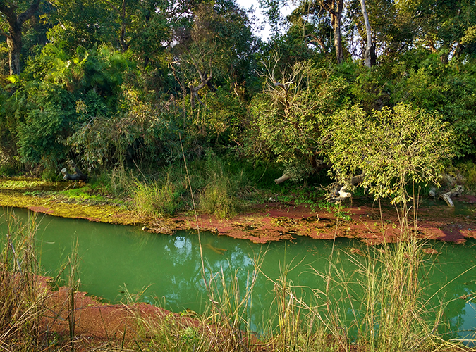 Akanksha Redhu | Travel India | croc water phone