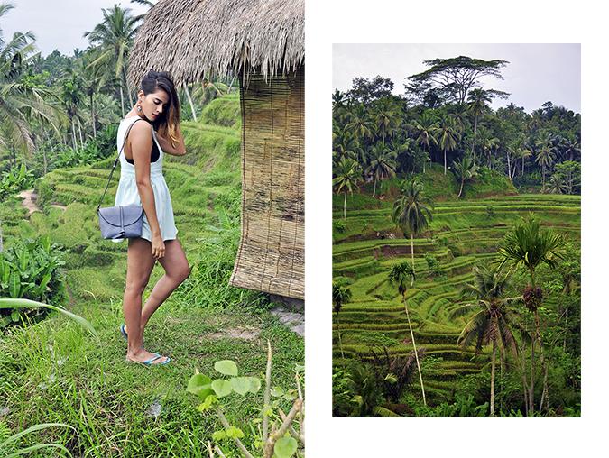 Tegalalang Rice Terraces - Ubud | Bali | Akanksha Redhu | combo 1