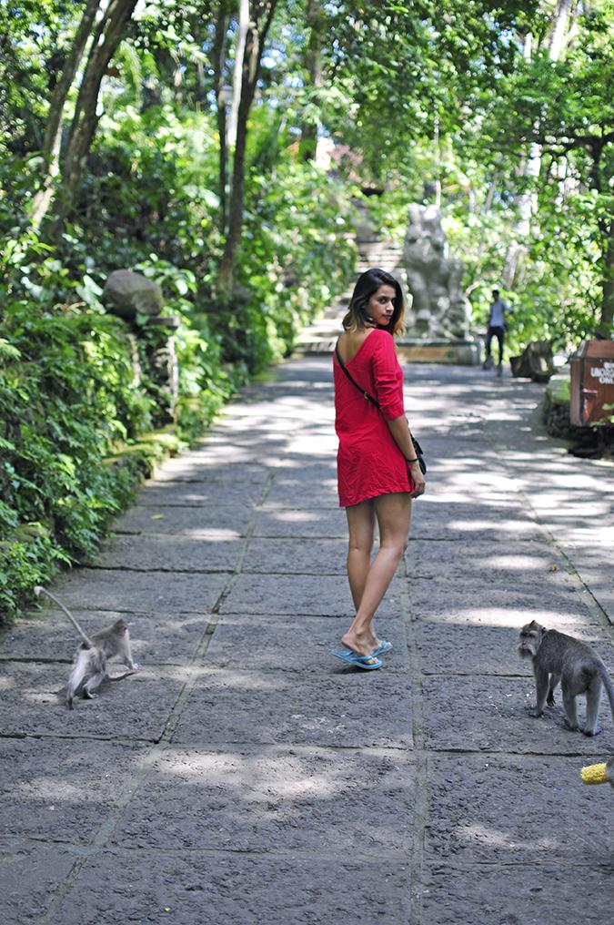 Sacred Monkey Forest Sanctuary - Ubud | Akanksha Redhu | walking with monkey full back