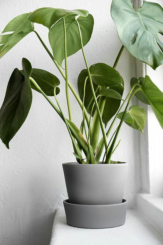 Home Inspo | Akanksha Redhu | grey plant pot