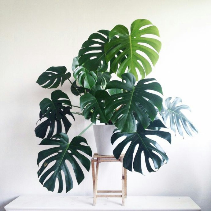 Home Inspo | Akanksha Redhu | big foliage on stool