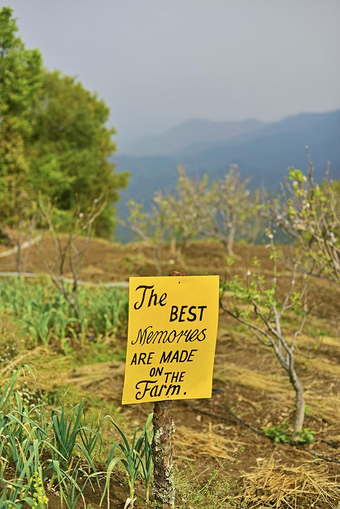 DYO The Organic Village Resort   Akanksha Redhu   best memories board