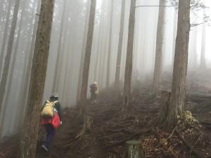 棒ノ折山 霧の杉林