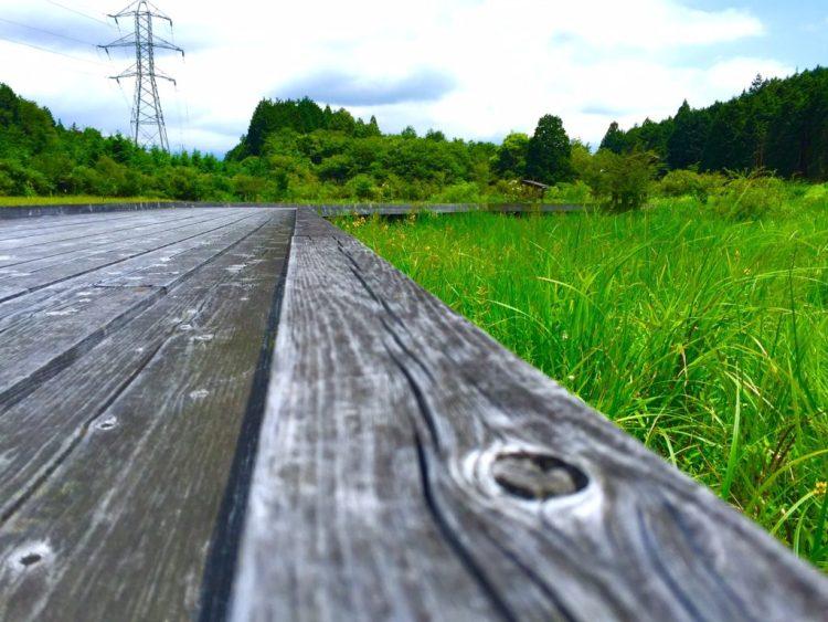 小田貫湿原5