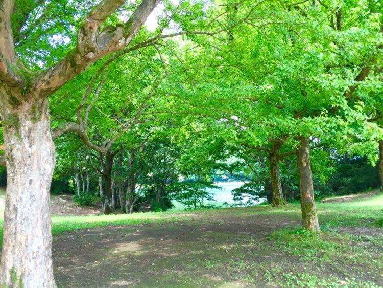 田貫湖の周りの森。