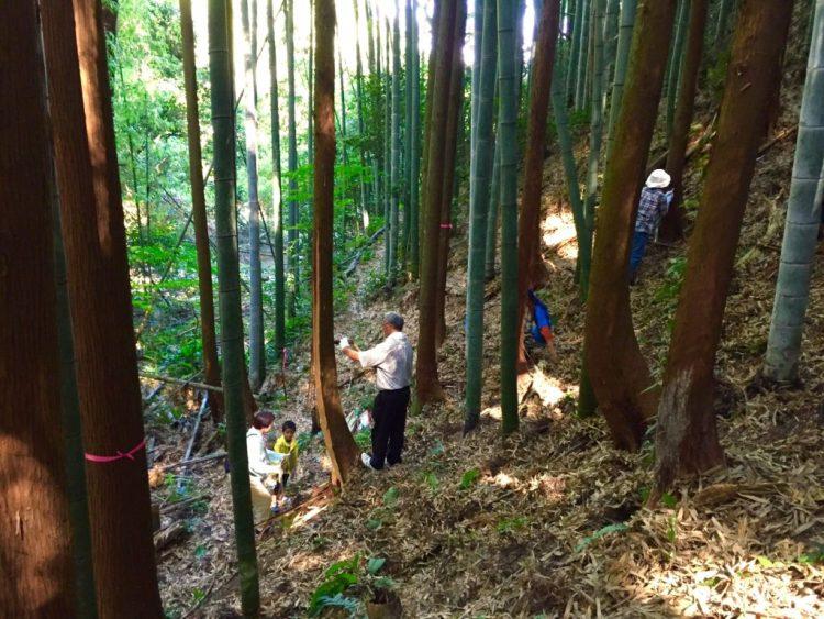 木の胸高直径を測る。