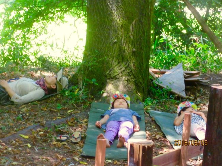 大きなサワグルミの木の下で。