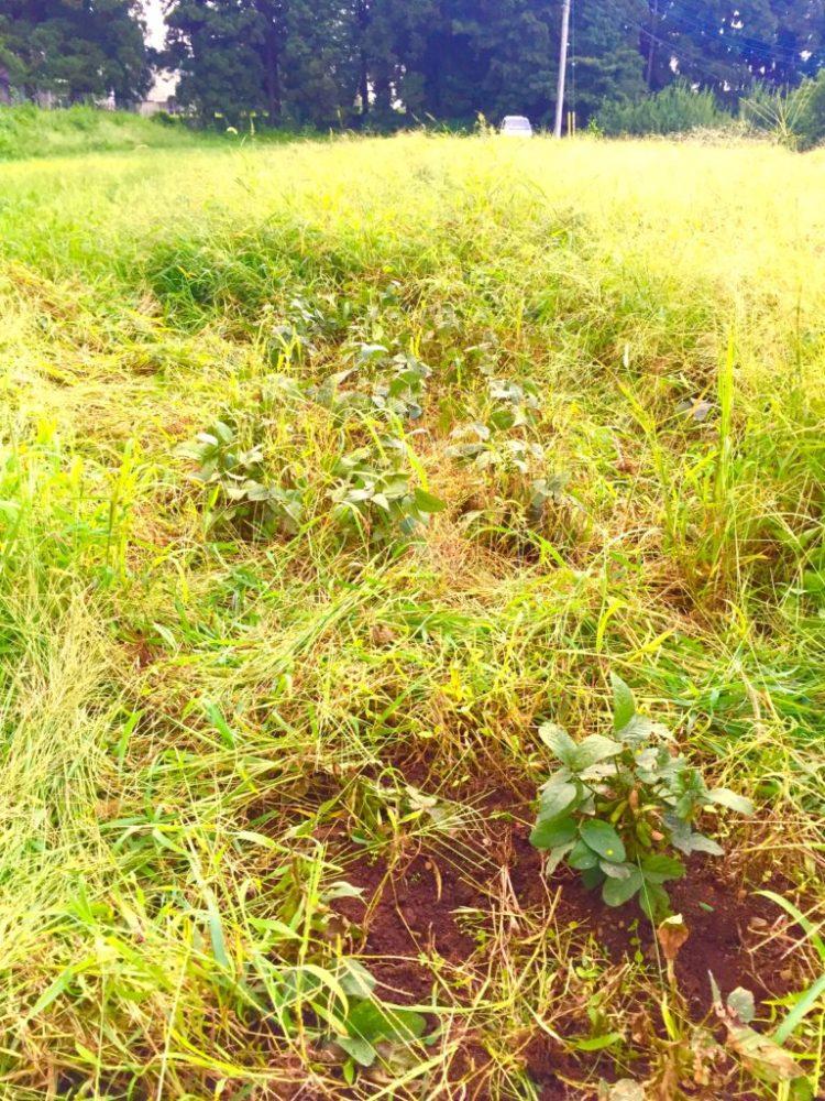 自然農法の畑3