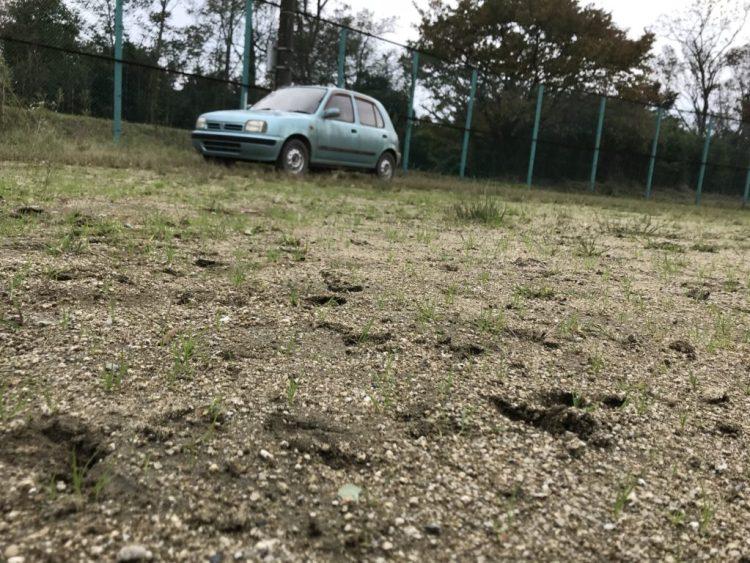 イノシシの足跡と車