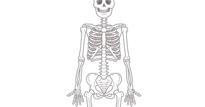 「骨模型 フリー素材」の画像検索結果