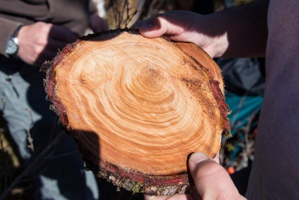 section of tree trunk