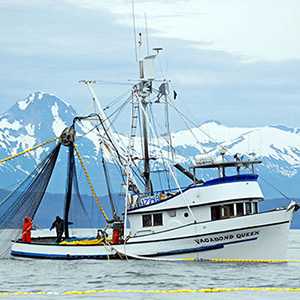 A purse seiner hauling in chum salmon in Amalga Harbor, Southeast Alaska. (Photo: Dave Harris)