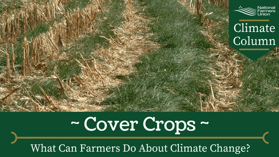 climate-column-cover-crops