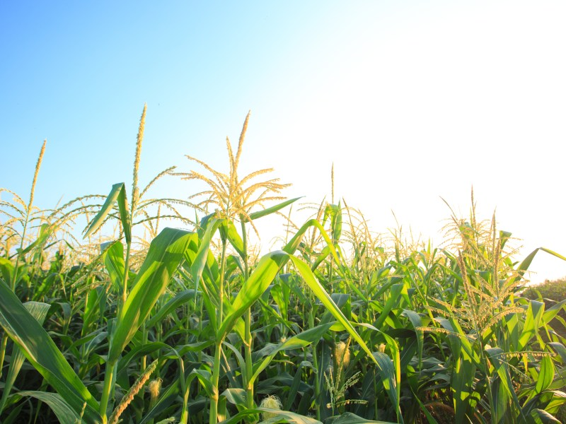 EPA's Biofuels Fix is Another Broken Promise to American Farmers