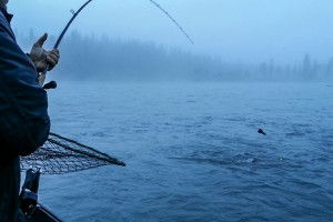 Kenai Trout and Dolly (3 of 5)