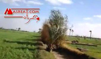 بني سميع مركز ابو تيج محافظة اسيوط