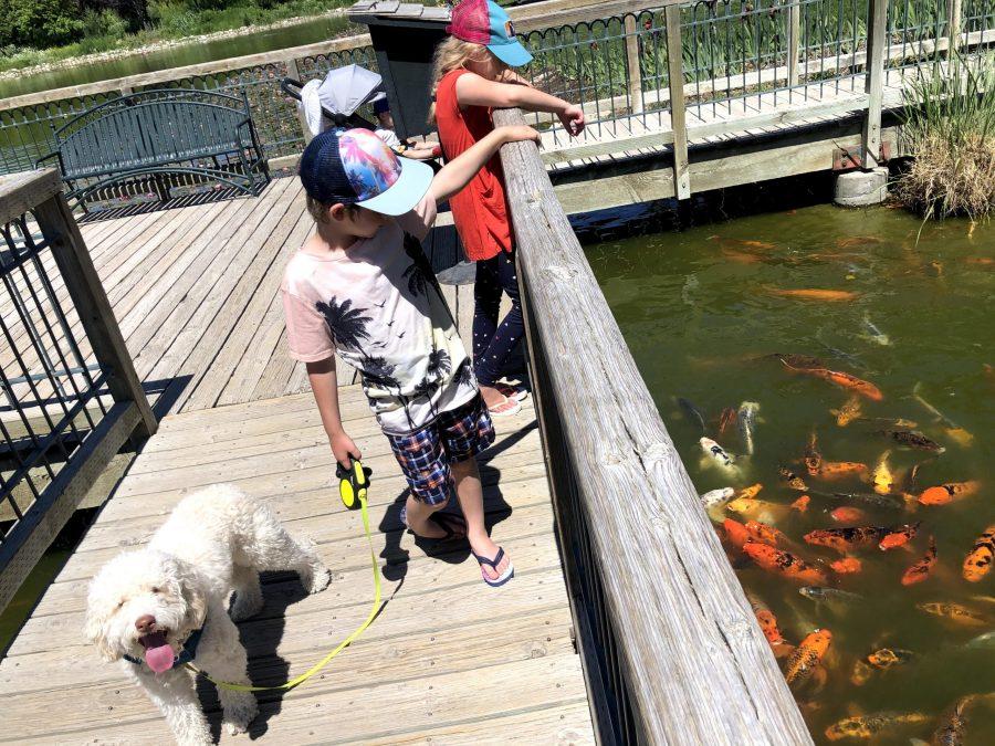 The Dog Days of Summer: The Ashton Gardens with Luna Tuna