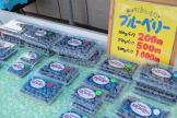oga_blueberry_01