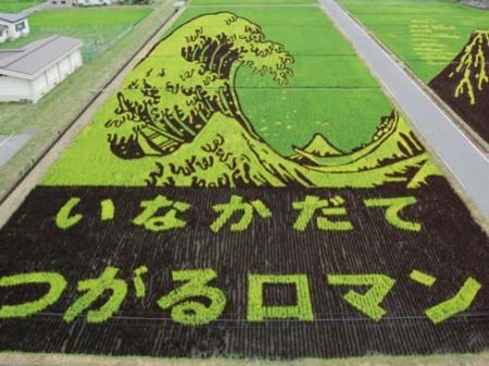 art-rice-05