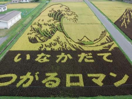 art-rice-07
