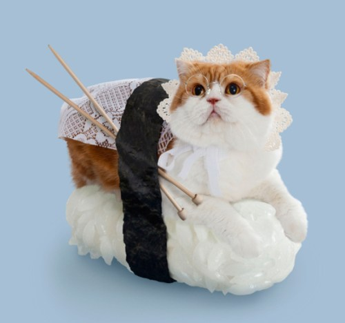 when-cats-and-sushi-combined-11