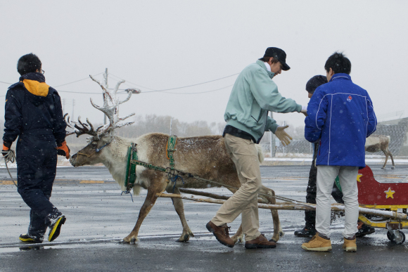 dominos-pizza-japan-take-reindeer-delivery-pizza-05