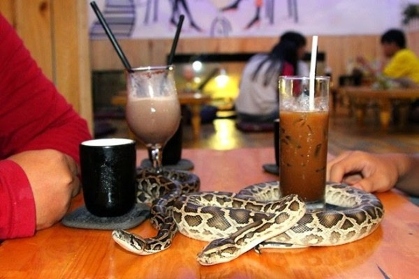 weirdest-japan-cafes-23