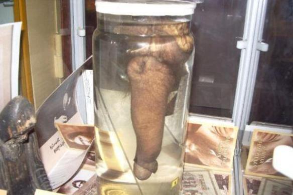 El Pene de Rasputín, exhibido en el Museo del Erotismo de San Petersburgo