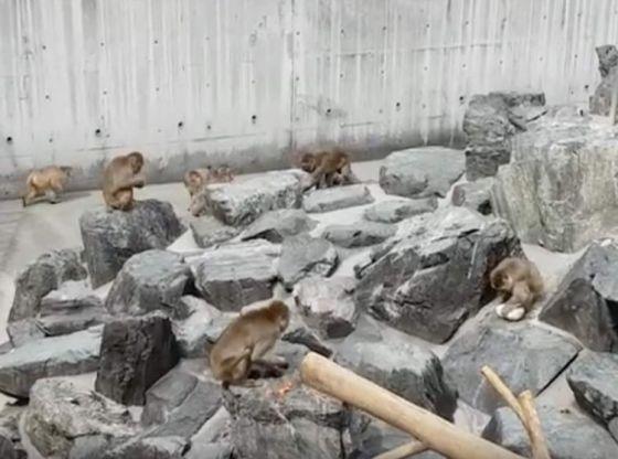 5SEC 299 (Iida Zoo,飯田動物園,Nagano, Japan, August 2018)