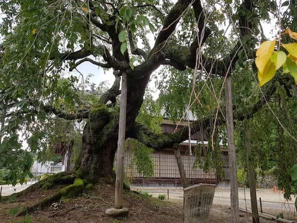 飯田市座光寺夏の麻績神社 (Omi Shrine) 2018,akihikogoto.com