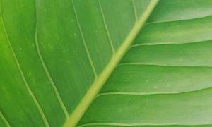 Love green.#color #shape #leaf