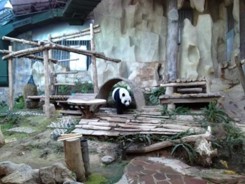 ChiangMaiZoo2011-164