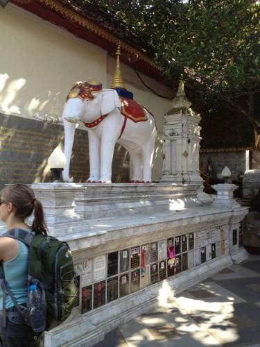 ChiangMaiZoo2011-23