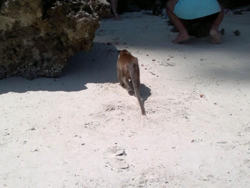 Phi Phi Islands2011-78