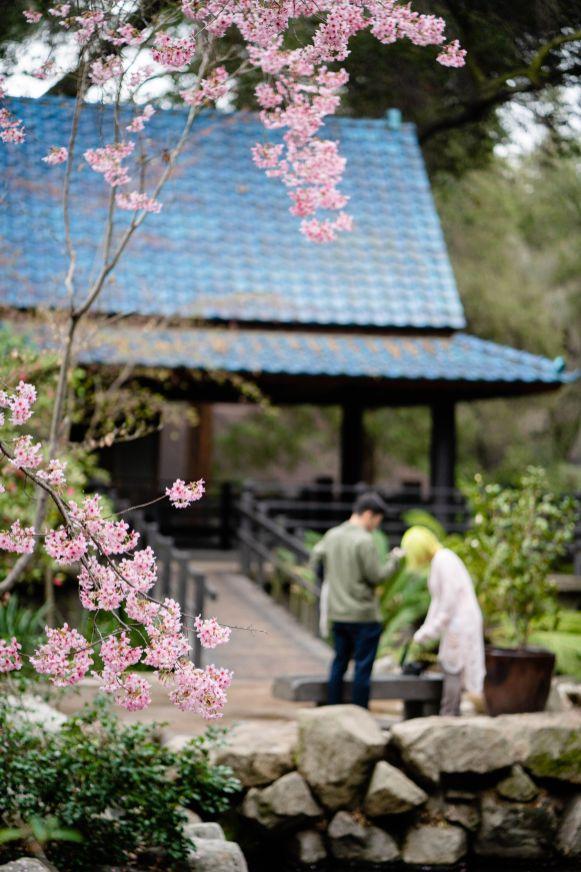 descanso garden japanese garden