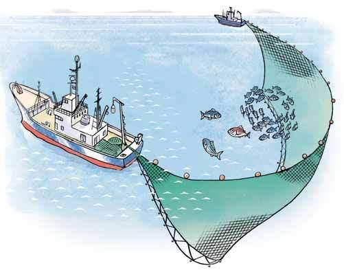 Scroll fishing