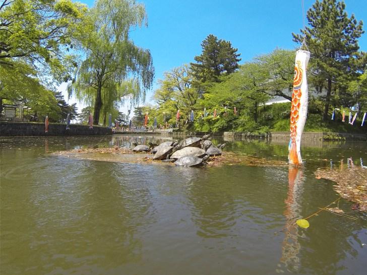 亀城公園お堀