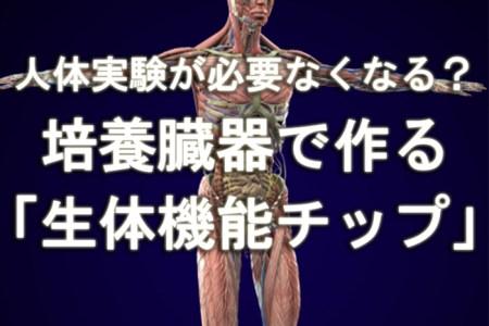 人体実験が必要なくなる?培養臓器で作る「生体機能チップ」