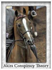 Current Horses