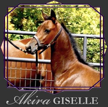Akira Giselle