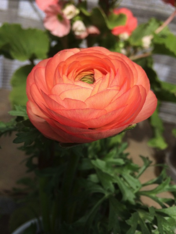 花好きが集う!ブルーメッセあきた・道の駅しょうわ(秋田県潟上市)